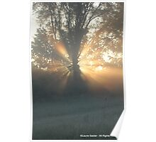 Tree Trunk Halo Poster