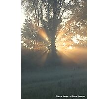 Tree Trunk Halo Photographic Print