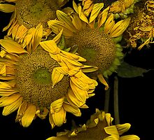 Crowded House - Sunflower Print by clare winslow