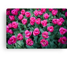 Bright Pink @ Keukenhof Canvas Print
