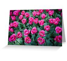 Bright Pink @ Keukenhof Greeting Card