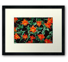 Orange Stars @ Keukenhof Framed Print