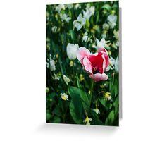 Pink Tulip @ Keukenhof Greeting Card