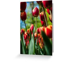 Red / Yellow Tulips @ Keukenhof Greeting Card