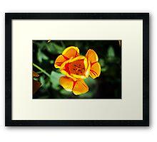 Yellow Tulip @ Keukenhof Framed Print