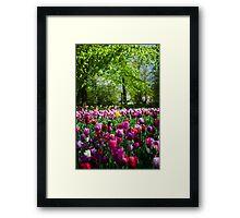 Colours of Keukenhof Framed Print