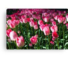 Pink Tulips @ Keukenhof Canvas Print