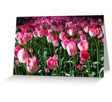 Pink Tulips @ Keukenhof Greeting Card