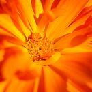 Organic Orange by Sheaney