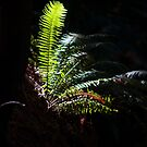Woodland Fern by Steve Hunter
