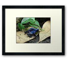 """Blue Dart Frog""  by Carter L. Shepard Framed Print"