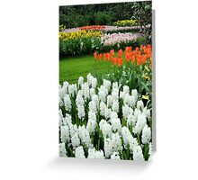 Dreamy White Hyacinths and Orange Tulips - Keukenhof Gardens Greeting Card