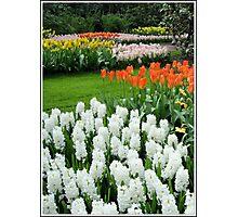 Dreamy White Hyacinths and Orange Tulips - Keukenhof Gardens Photographic Print