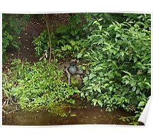 Beatrix Potter Garden (2) Frog Poster