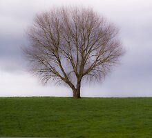 Lonely Tree by John Bourne