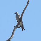 Not so grounded by burnettbirder