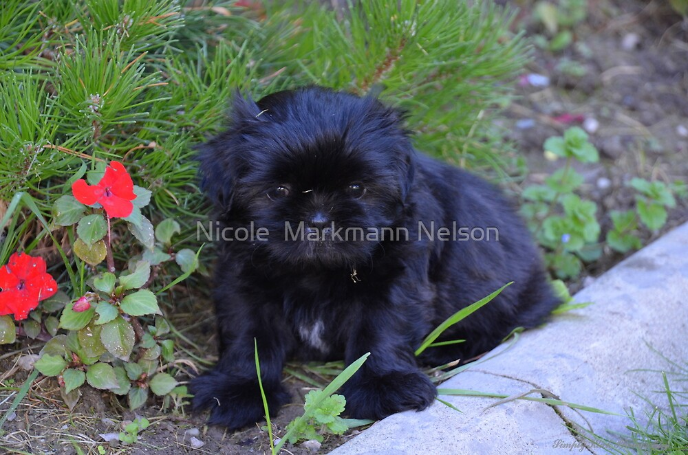 Puppy Libby by Nicole  Markmann Nelson