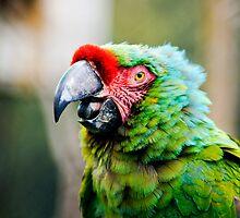 Mad Macaw! by Guatemwc