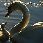 Momma and Baby Swan by Bill  Watson