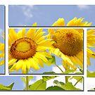 Sun Flower. by angelc1