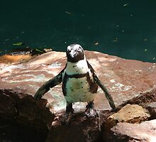 """""""Black Footed Penguin 2""""  by Carter L. Shepard by echoesofheaven"""