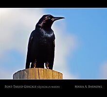 Grackle - - Posters & More by Maria A. Barnowl