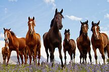 High Country Horses by Robyn Carter