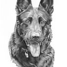 Black german shepherd by artbykarie-ann