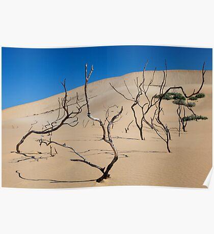 Shifting Dune Poster
