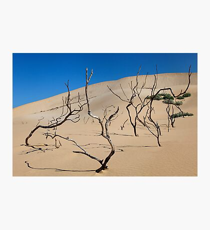 Shifting Dune Photographic Print