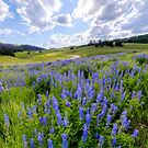 Lupine Pass by Chad Dutson