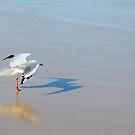 3D Seagull by Anton Gorlin