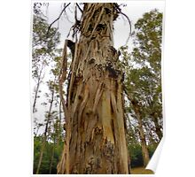 snake skin shadding tree Poster