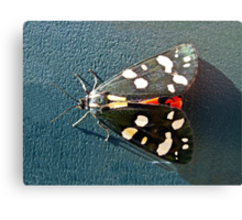 Scarlet Tiger Moth Canvas Print