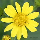 flower in sunshine by michael jewkes