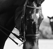 Keyso Dressage  by picturesfrary