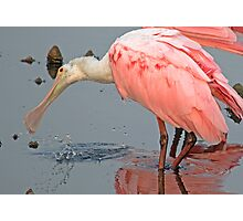 Spoonbill Splashing Around Photographic Print