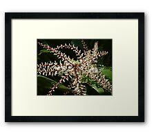 Blossoms - Flowers Framed Print