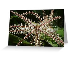Blossoms - Flowers Greeting Card
