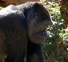 Gorilla Profile by Elizabeth Carpenter