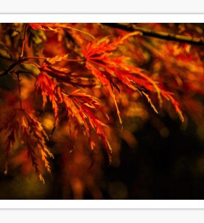 Impressions of autumn Sticker