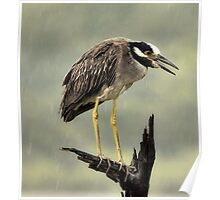 Heron In The Rain Poster