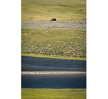 Distant Bison, Yellowstone National Park Photographic Print