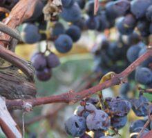 Bent Harbor grapes Sticker