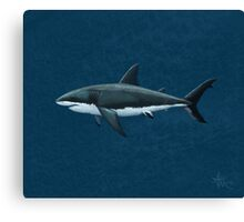 Carcharodon carcharias Canvas Print