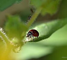 Ladybug Snacks on a Leaf by TheBluePlanet