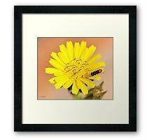 Red Fly Bee on a Dandelion Flower Framed Print