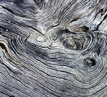 Tree Bark Abstract by Eve Parry