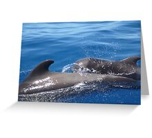 Pilot Whales Greeting Card
