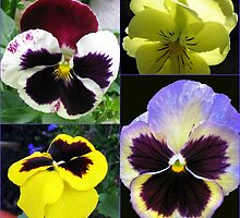 Cute Pansy Faces Collage by MidnightMelody